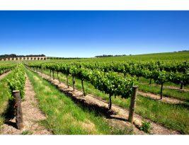North and Southern Rhône Soils